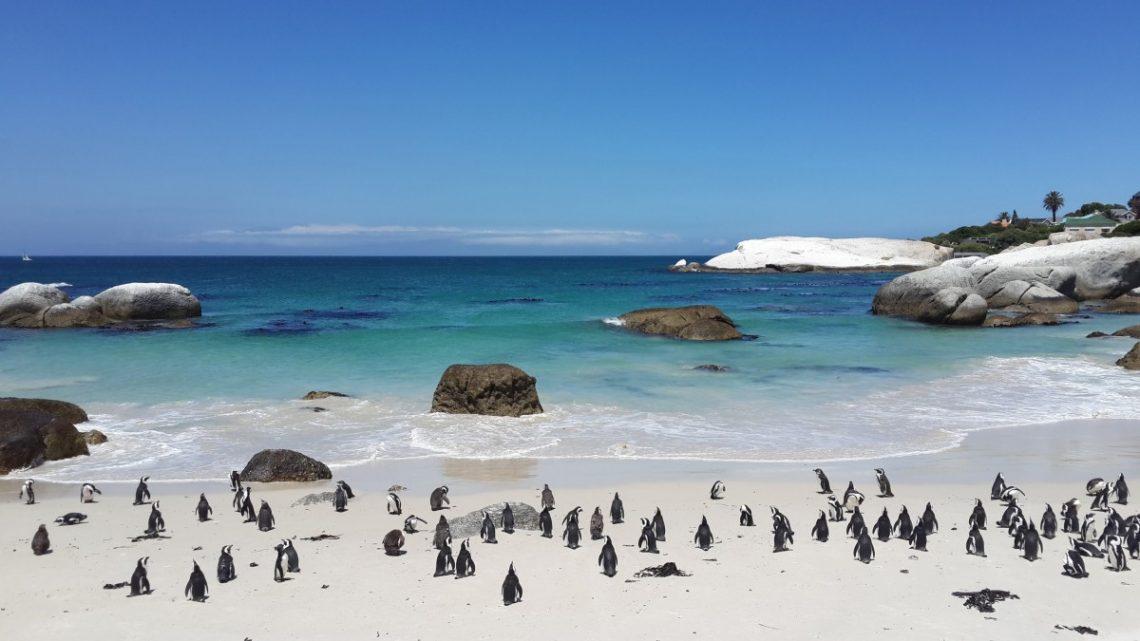 Sud-Afrique