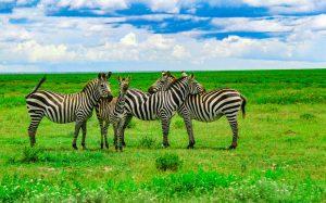Un safari en Tanzanie pour une personne en situation de handicap